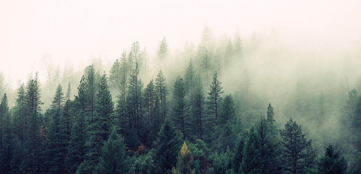 La foresta: il polmone verde della Terra. Incerta ancora la tutela