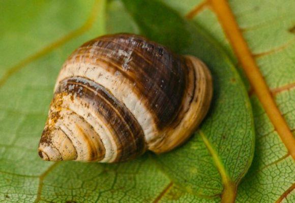 Il rapporto sulla situazione generale della biodiversità
