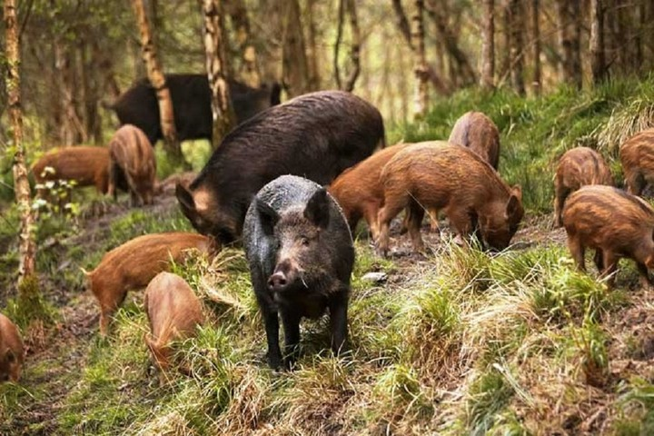 Responsabilità della PA per il risarcimento del danno causato dalla fauna selvatica alle attività agricole. Tutela risarcitoria e indennitaria