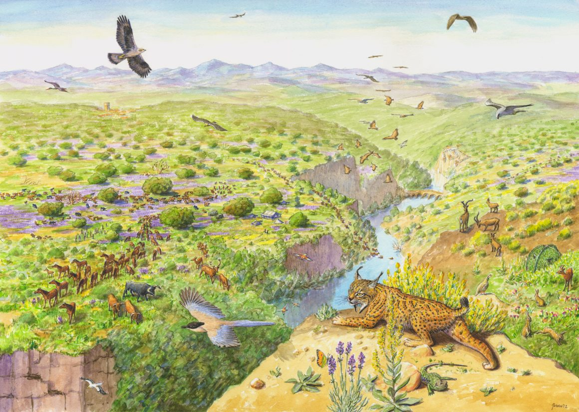 Rigenerazione, rinaturazione, rewilding