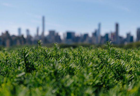 Ius variandi urbanistico e polmoni verdi. Quando si può?