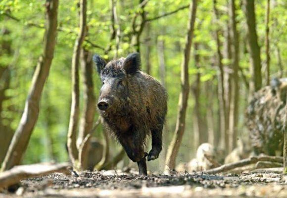 La responsabilità della PA per danno cagionato da fauna selvatica: natura della responsabilità e doveri