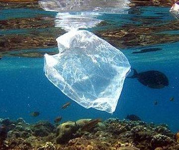 """La Cassazione e la questione di legittimità costituzionale del reato di inquinamento ambientale: una risposta troppo """"veloce"""" ad una questione complessa."""