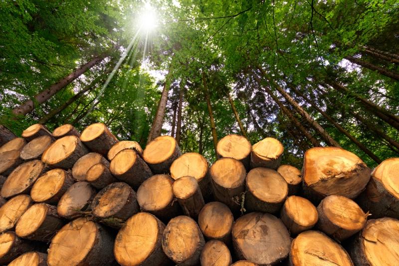 Il decreto forestale n. 34 del 2018: una legge sul bosco o sulla produzione di legname?