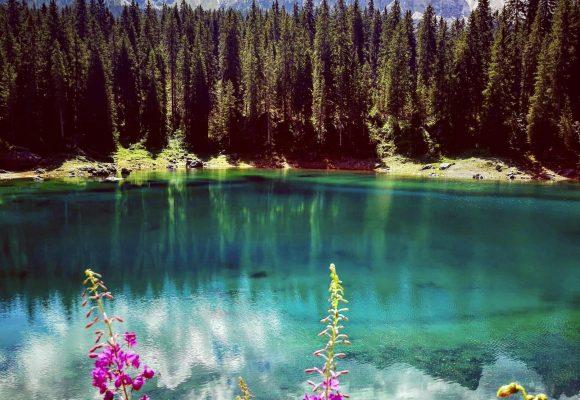 Operatività ex lege del vincolo paesaggistico con riferimento alle aree boscate