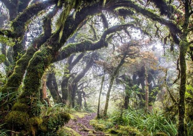 La nuova strategia europea per le Foreste: un modello di regolazione del GND