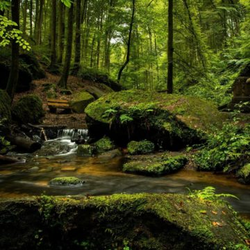 Sustainable management of natural resources by the EU