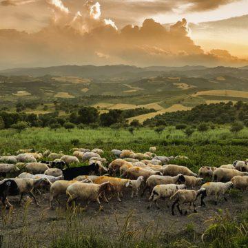 Pascolo del bestiame e applicazione di fertilizzanti al terreno in prossimità di zone Natura 2000