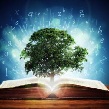 """Accesso all'informazione ambientale: il limite della """"eccessiva genericità"""" dell'istanza."""