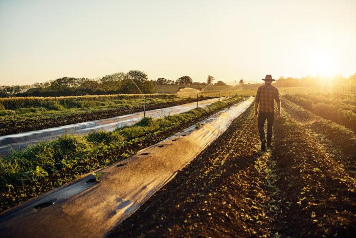 Disciplina applicabile per l'utilizzazione dei fanghi di depurazione in agricoltura: valori soglia e poteri delle regioni.
