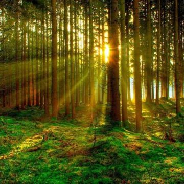 Ancora sul decreto forestale n. 34 del 2018