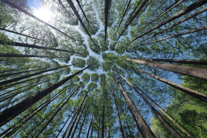 Accesso alle informazioni ambientali contenute nei fascicoli giudiziari