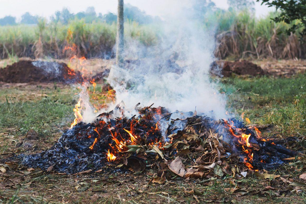 L'abbruciamento dei residui vegetali: il discrimine tra condotta lecita, la contravvenzione di gestione non autorizzata e il delitto di combustione illecita di rifiuti
